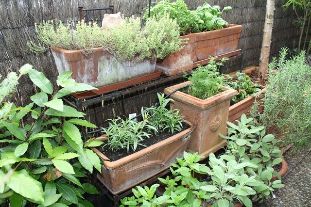 cultiver les herbes aromatiques en pots - Planter Des Herbes Aromatiques En Jardiniere