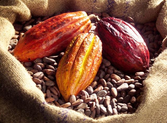 Gut gemocht histoire et fabrication du chocolat OP82